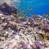 水中できれいな魚に囲まれる紅海のパノラマビュー