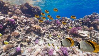 水中できれいな魚に囲まれる紅海のパノラマビュー/エジプト