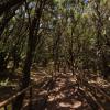 ガラホナイ国立公園のパノラマビュー