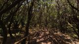 ガラホナイ国立公園のパノラマビュー/スペイン・カナリア諸島