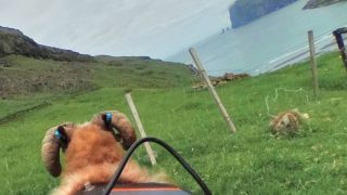 撮影者は羊!フェロー諸島の大自然と街並みが見れるSheep View(シープビュー)/デンマーク フェロー諸島