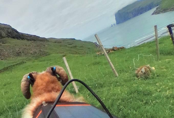 撮影者は羊!フェロー諸島の大自然と街並みが見れるSheep View(シープビュー)