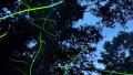 六本木ヒルズ森タワー屋上のスカイデッキから見えるパノラマビューと雨雲レーダー/東京都港区