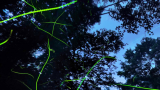 志賀高原の蛍パノラマビューと雨雲レーダー/長野県山内町