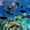 ダイビング好きにおすすめ!ニューカレドニアの魚だらけのパノラマビュー
