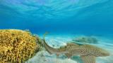 ニューカレドニア島ブロニーの海パノラマビュー/フランス