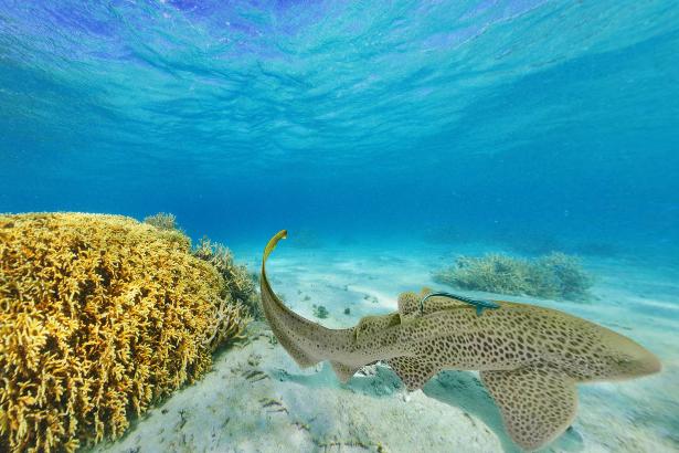 ニューカレドニア島ブロニーの海パノラマビュー