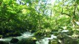 奥入瀬渓流・阿修羅の流れパノラマビューと雨雲レーダー/青森県十和田市