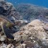 ウミガメの泳ぐ姿が見れるオーストラリア グレートバリアリーフの水中ストリートビュー