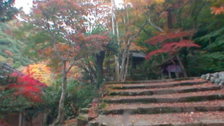 紅葉「大威徳寺」のパノラマビューと雨雲レーダー/大阪府岸和田市
