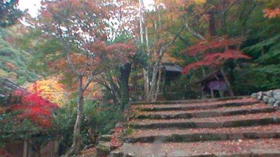 紅葉「大威徳寺」のパノラマビュー