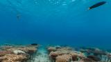 サンゴ移植地域「山田ポイント」ストリートビューと雨雲レーダー/沖縄県恩納村