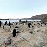 露岩地帯・ラングホブデのアデリーペンギンのルッカリー(集団繁殖地)パノラマビュー