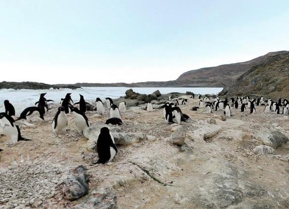露岩地帯・ラングホブデのアデリーペンギンのルッカリー(集団繁殖地)パノラマビュー/南極