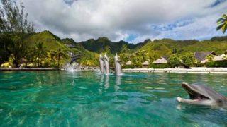モーレア島のイルカパノラマビュー/タヒチ