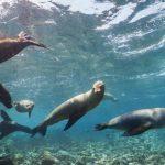 アシカと一緒に泳いでいる気分になれるガラパゴス諸島のストリートビュー