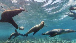 アシカと一緒に泳いでいる気分になれるガラパゴス諸島のストリートビュー/エクアドル