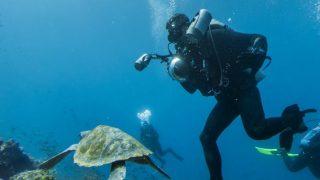 スキューバダイビングをはじめたくなるウミガメが見えるガラパゴス諸島のストリートビュー
