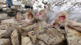 お猿さんの温泉天国。獄谷野猿公苑パノラマビューと雨雲レーダー/長野県山ノ内町