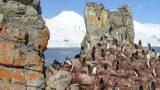 南極大陸ハーフムーン島のペンギンストリートビュー/南極