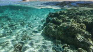 すばらしい透明度の海!オーストラリア レディー・エリオット島の水中ストリートビュー