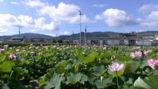 蓮池ハスのパノラマビューと雨雲レーダー/高知県土佐市