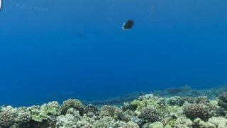 スキューバをしている気分になるアメリカ ハワイ モロキニクレーターの水中ストリートビュー pt.2