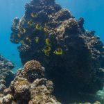 海に潜っている気分になるアメリカ ハワイ ハナウマ湾の水中ストリートビュー pt.2