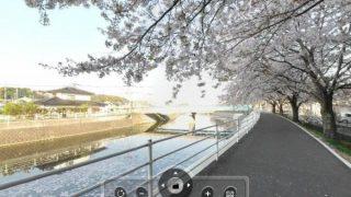 宇美川沿いの桜並木のパノラマビューと雨雲レーダー/福岡県糟屋郡志免町
