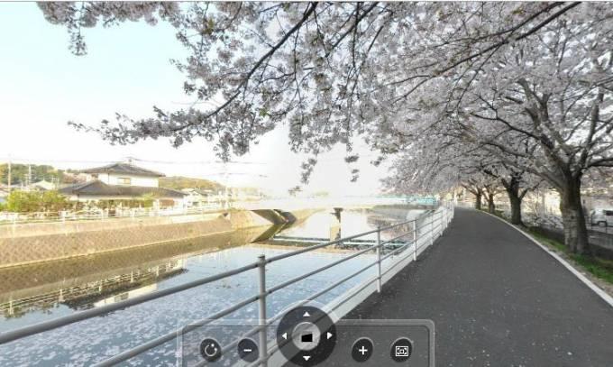 宇美川沿いの桜並木のパノラマビュー