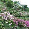 皿山公園(つつじ)のパノラマビュー