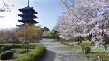 五重塔と桜が美しい世界遺産 東寺のストリートビューと雨雲レーダー