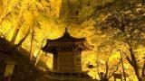 香嵐渓(こうらんけい)パノラマビューと雨雲レーダー/愛知県豊田市