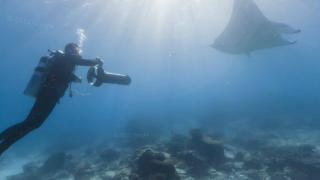 優雅に泳ぐマンタが見れるグレートバリアリーフの水中ストリートビュー/オーストラリア