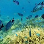 ヌメア イロカナールのサンゴ礁パノラマビュー