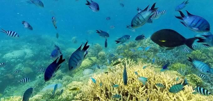 ヌメア イロカナールのサンゴ礁パノラマビュー/ニューカレドニア