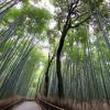 嵐山 竹林のパノラマビュー