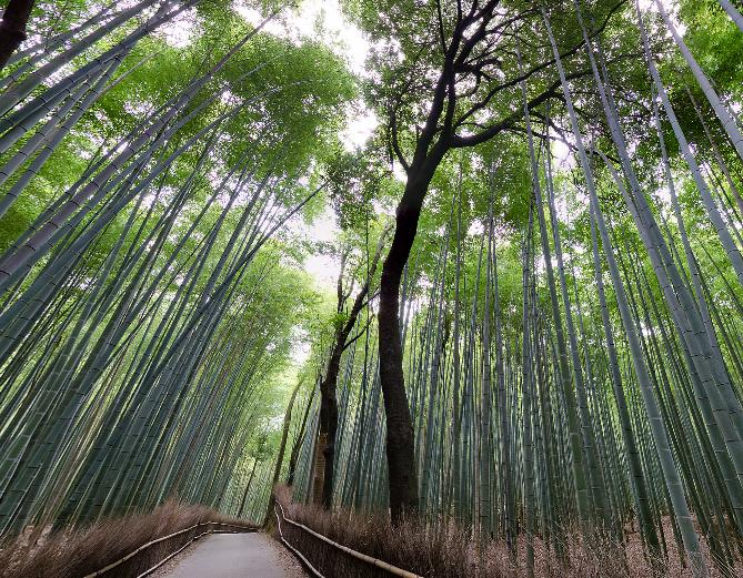 停止中:嵐山 竹林のパノラマビューと雨雲レーダー/京都府京都市