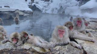 温泉につかる猿に癒される地獄谷野猿公苑のストリートビューと雨雲レーダー
