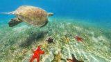 シュノーケリングをしたくなるニューカレドニアの海亀やヒトデが幻想的なパノラマビュー